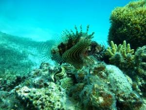 Atemberaubende Unterwasserwelt
